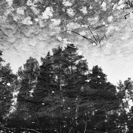 Skogsreflektion - 30x30 cm